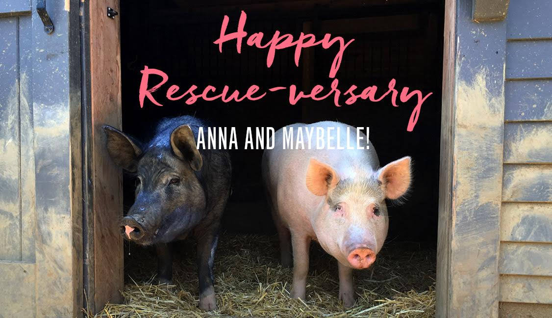 Anna and Maybelle Rescue-versary
