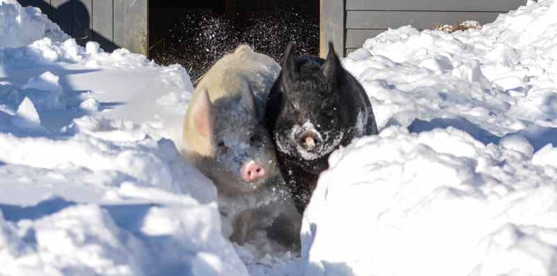 Anna and Maybelle down a snowy path