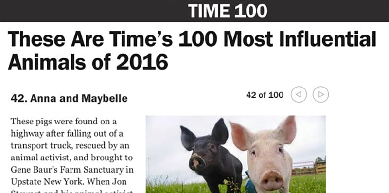 Anna and Maybelle make Time Magazine's 100 most influential animals of 2016