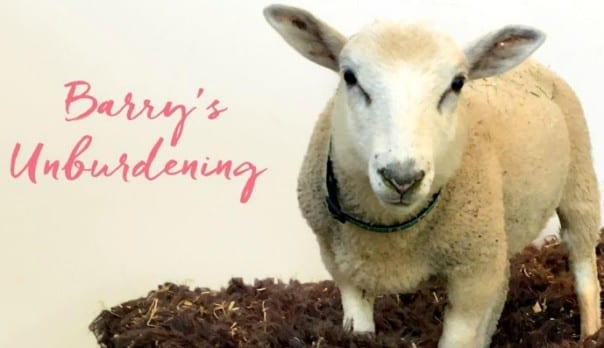 Barry's Unburdening Featured Image: Barry the Sheep
