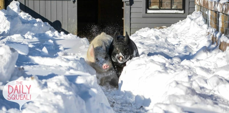 Anna and Maybelle rush through the snow