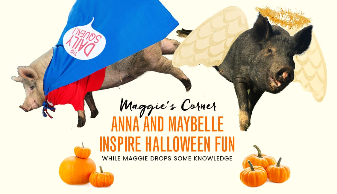 Anna & Maybelle Inspire Halloween Fun Featured Image: Pigs in Costumes