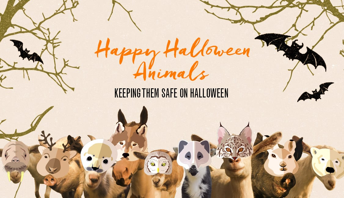 Happy Halloween Animals Featured Image: Illustrated Animals Wearing Masks for Halloween