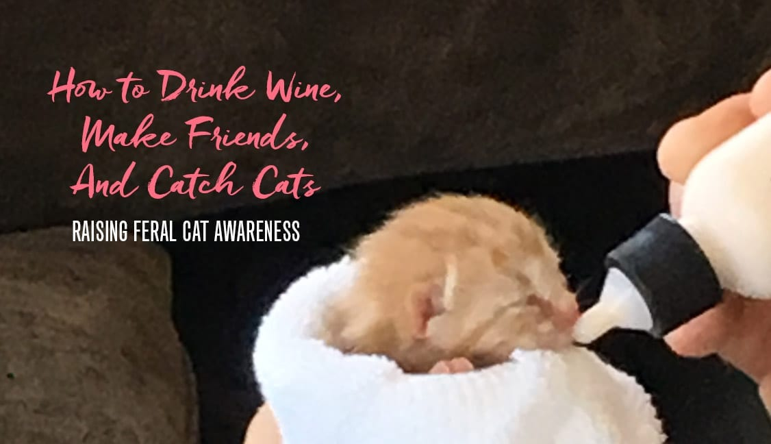 Raising feral cat awareness featured image: Kitten being fed from bottle