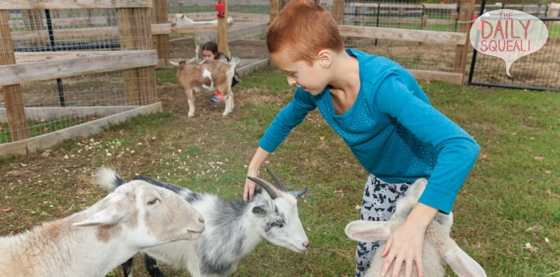 Playing with goats and other farm animals