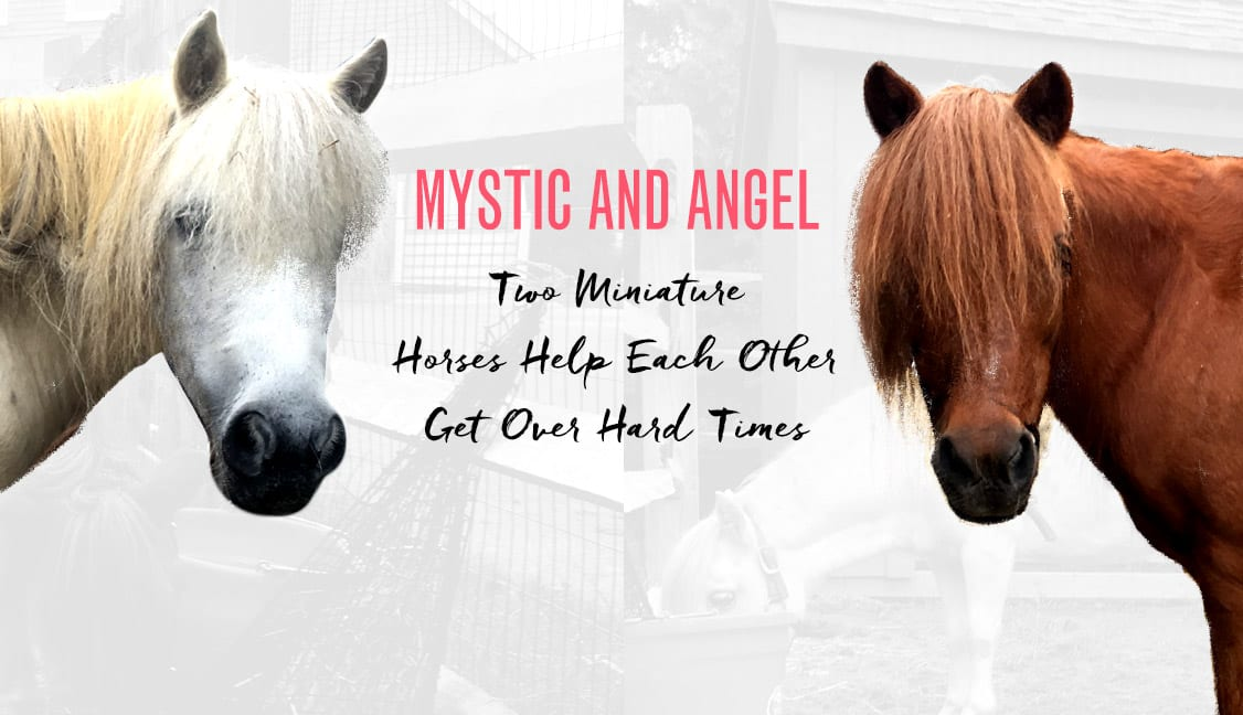 Mystic and Angel Featured Image: Two Horses Looking at Camera