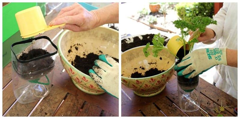 Make a self watering herb garden step 5