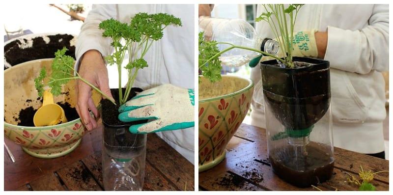 Make a self watering herb garden step 6
