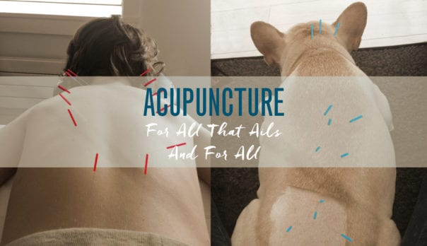 Acupuncture for all: Human and dog getting acupuncture done