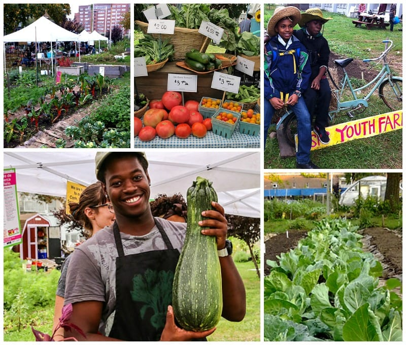 HSPS Youth Farm collage of vegetables, farmers market, and students