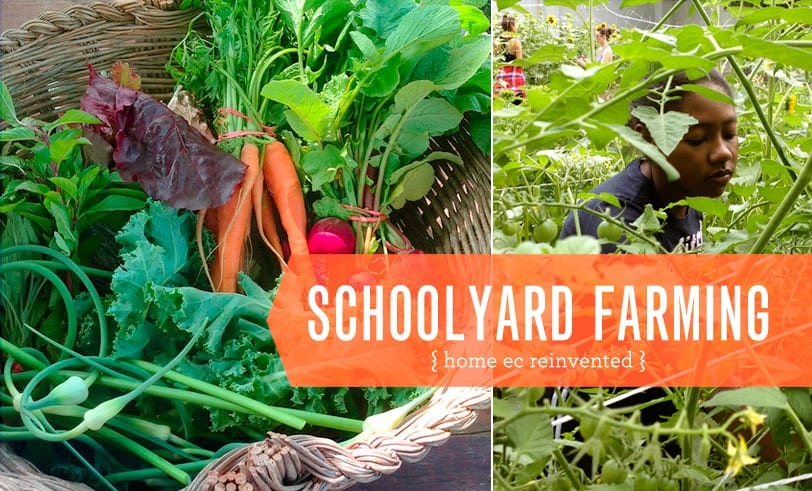 Schoolyard Farming Featured Image Vegetables