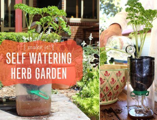 Make It! Self Watering Herb Garden