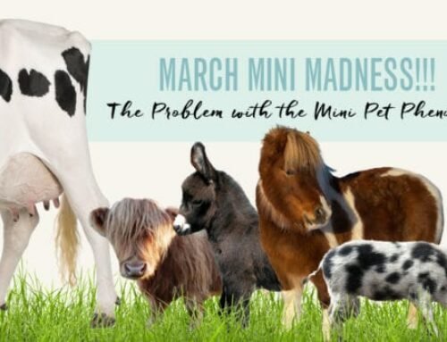 March Mini Madness