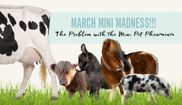March Mini Madness Featured Image: Mini Farm Animals in Group