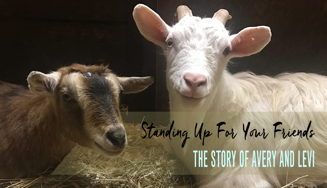 Avery and Levi in Barn Featured Story Image