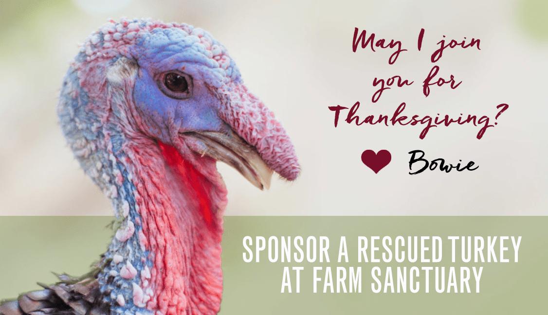 Sponsor a Rescued Turkey at Farm Sanctuary