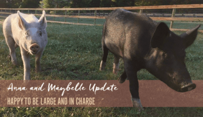 Anna and Maybelle Update: Happy to Be Large and In Charge Featured