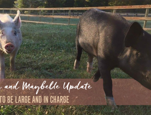 Anna and Maybelle Update: Happy To Be Large and In Charge