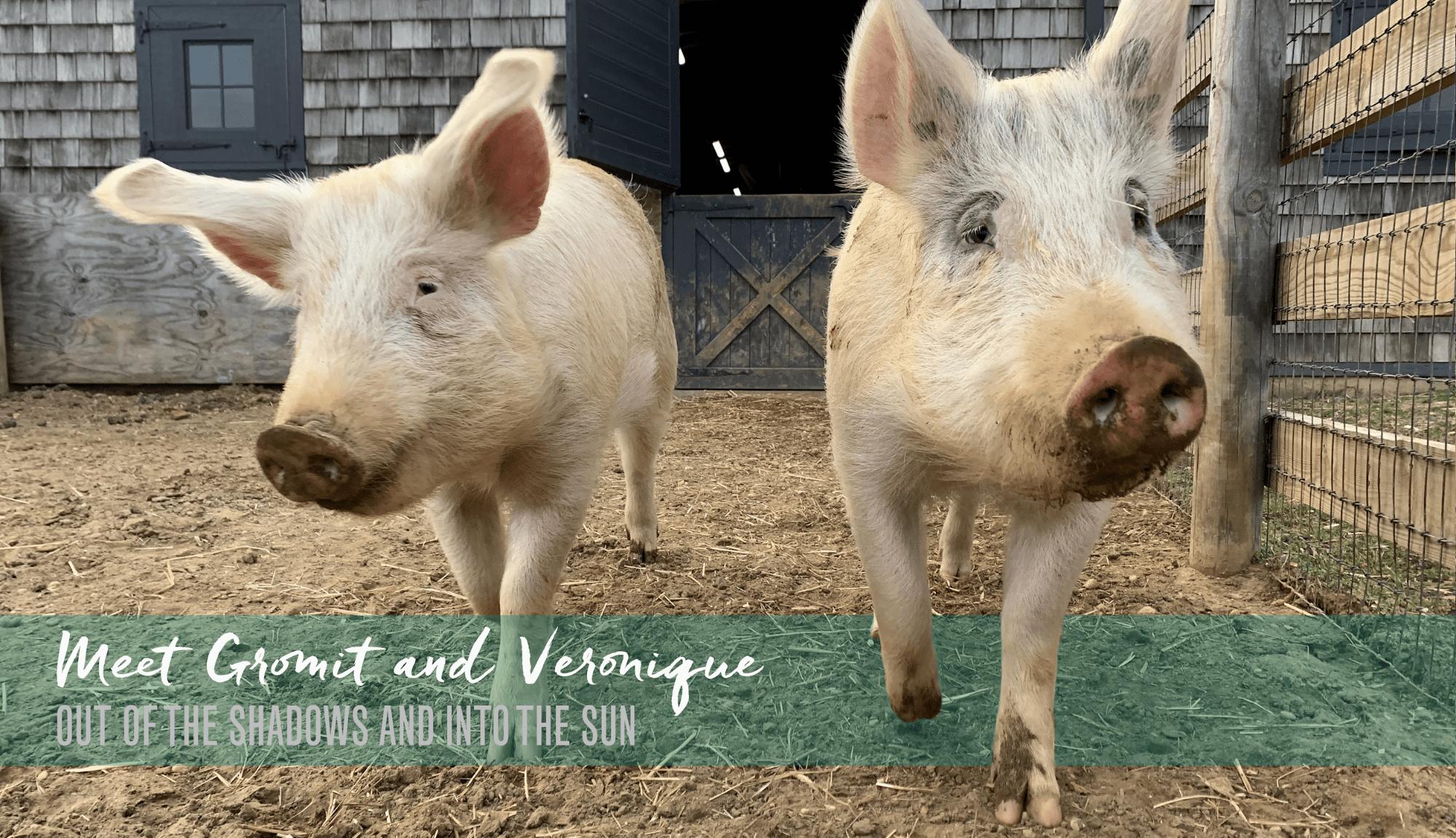 Meet Gromit and Veronique
