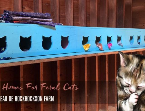 Tiny Homes for Feral Cats: Le Chat-eau de The Hey Friend Foundation