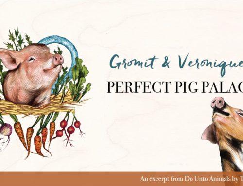 Gromit & Veronique's Perfect Pig Palace