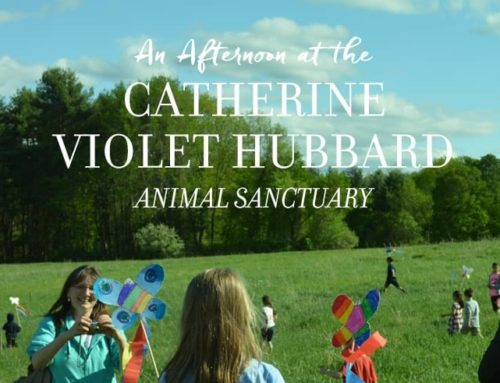 An Afternoon at the Catherine Violet Hubbard Animal Sanctuary