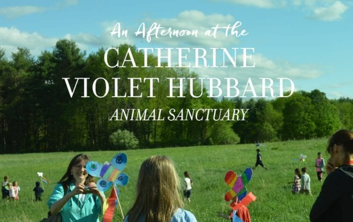 An Afternoon at the Catherine Violet Hubbard Animal Sanctuary Featured Image with Title