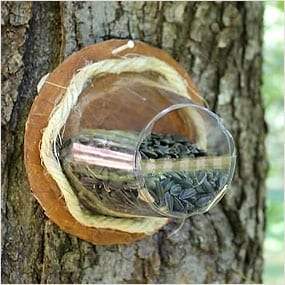 Cup of birdseed tied to tree