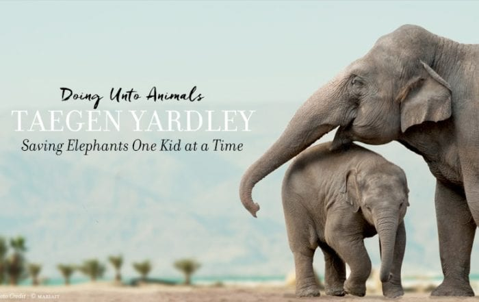 Doing Unto Animals Taegen Yardley: Saving Elephants One Kid at a Time Featured Image including Mother and Baby Elephant