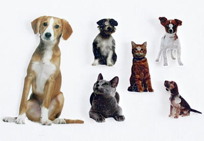 Example of pet photos to use with shrink film