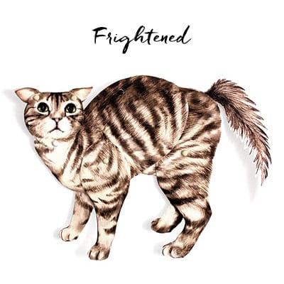 Bradded Cat Craft in Frightened Pose