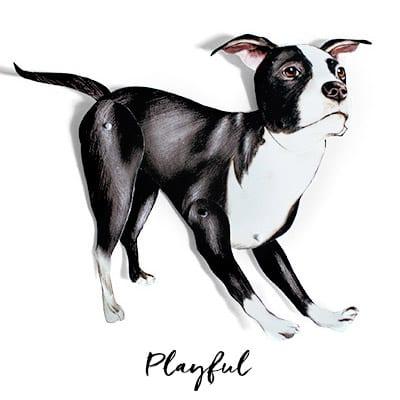 Bradded Dog Craft in Playful Pose