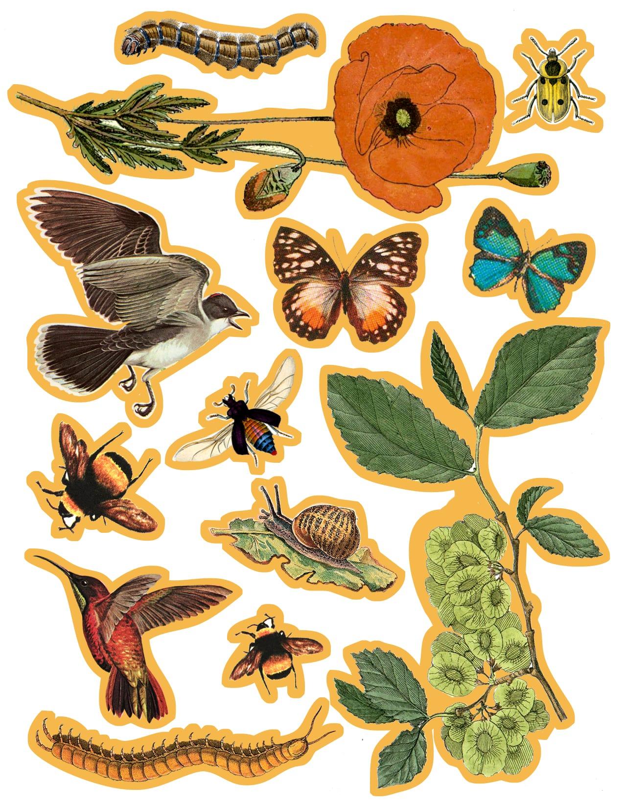 Pollinator Placemat Cutout Template