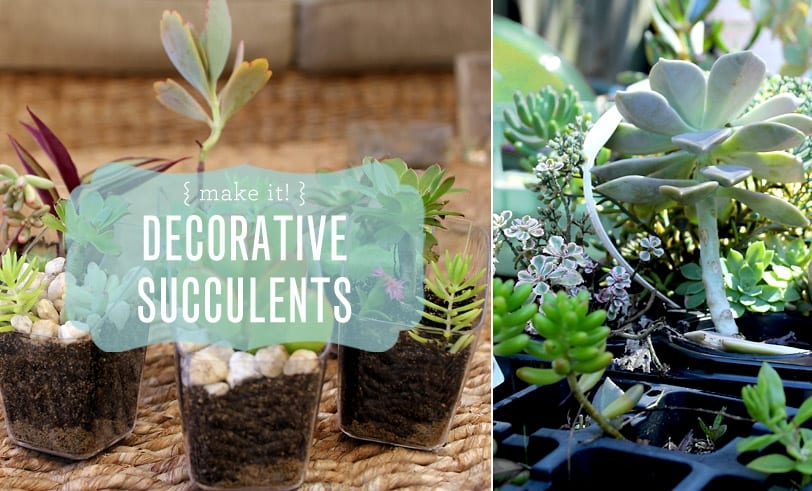 Make It! Decorative Succulent Featured Image with closeup of finished succulent in recycled plastic containers