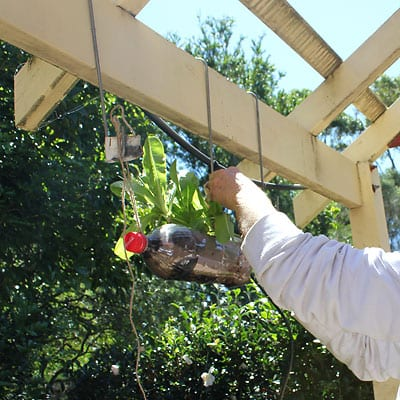 Hanging one bottle planter