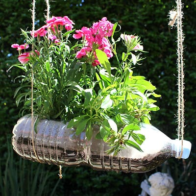 Closeup of a single hanging garden with pink flowers