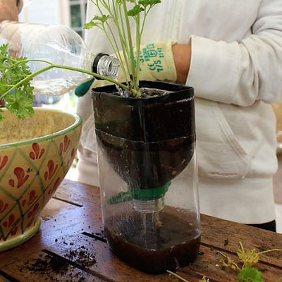Watering seedling making sure to test draining system
