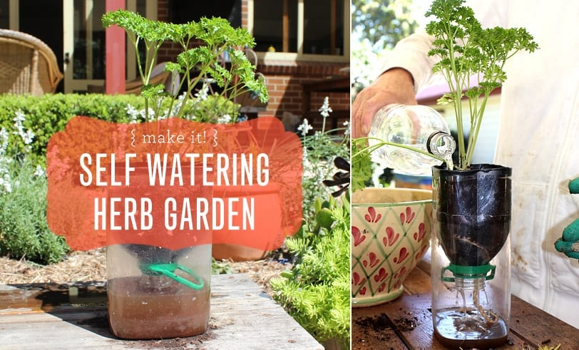 Reusing our plastics: Make a Self Watering Herb Garden Featured Image with Blog Title and Photo of Finished Craft