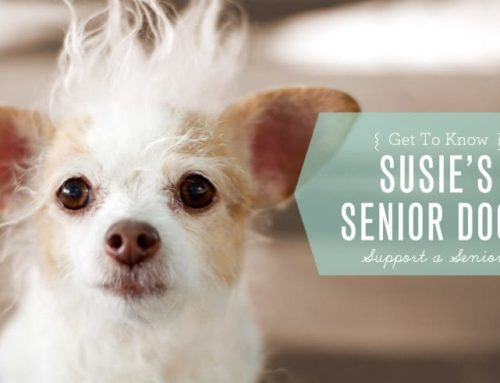 Get to Know Susie's Senior Dogs: Support A Senior