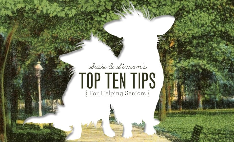 Top Ten Tips for Helping Senior Dogs Featured Image Grassy Walking Area with Silhouette of Senior Dogs